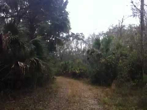 Green Swamp East (Florida Trail)