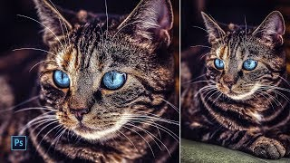 Photoshop Tutorial | How to edit a kitty photo with Photoshop | Camera Raw Filter