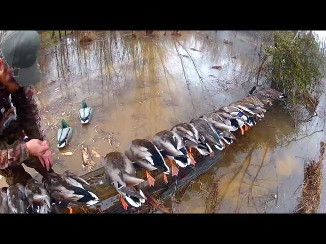 Duck Hunt Virginia North Carolina