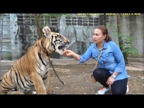 Tiger Temple Morning Tour Thailand by Bangkok Best Travel
