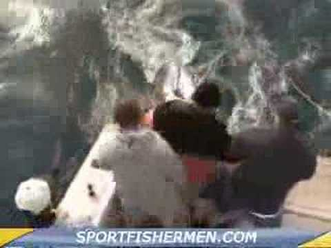 Giant Bluefin Tuna Fishing