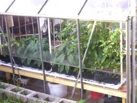 Aeroponic Hydroponics Bubbleponics Growing Pot Week 03