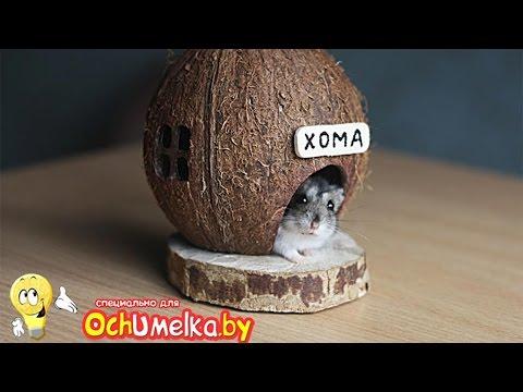 Домик для хомяка своими руками из кокоса