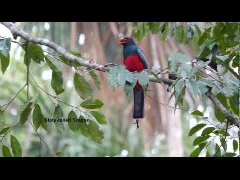 Birding Belize 2012