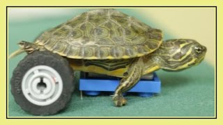 Turtle Prosthetic Made from LEGO