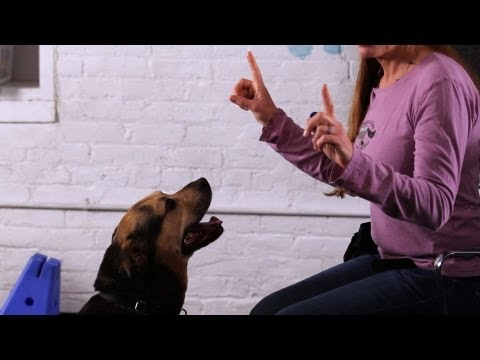 How to Make Your Dog Talk | Dog Tricks
