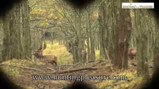 Fallow Buck Hunting In Hungary With Hunting Pleasure 2014