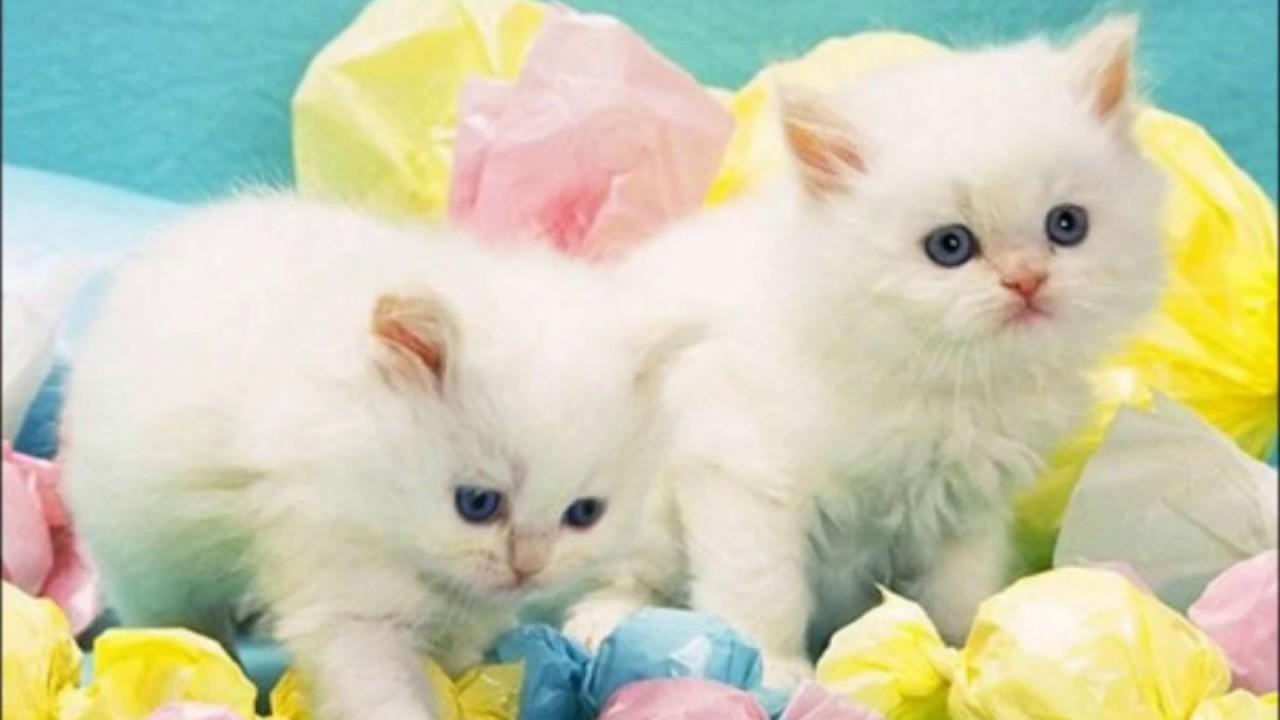 Poezen Katten Poes Poesen Kat Kater Kitten Video