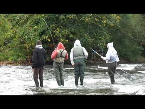 Salmon Fishing Pulaski Ny (Huge Coho)