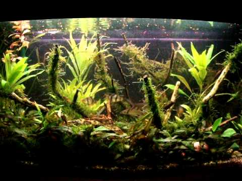 how to make money selling moss aquarium