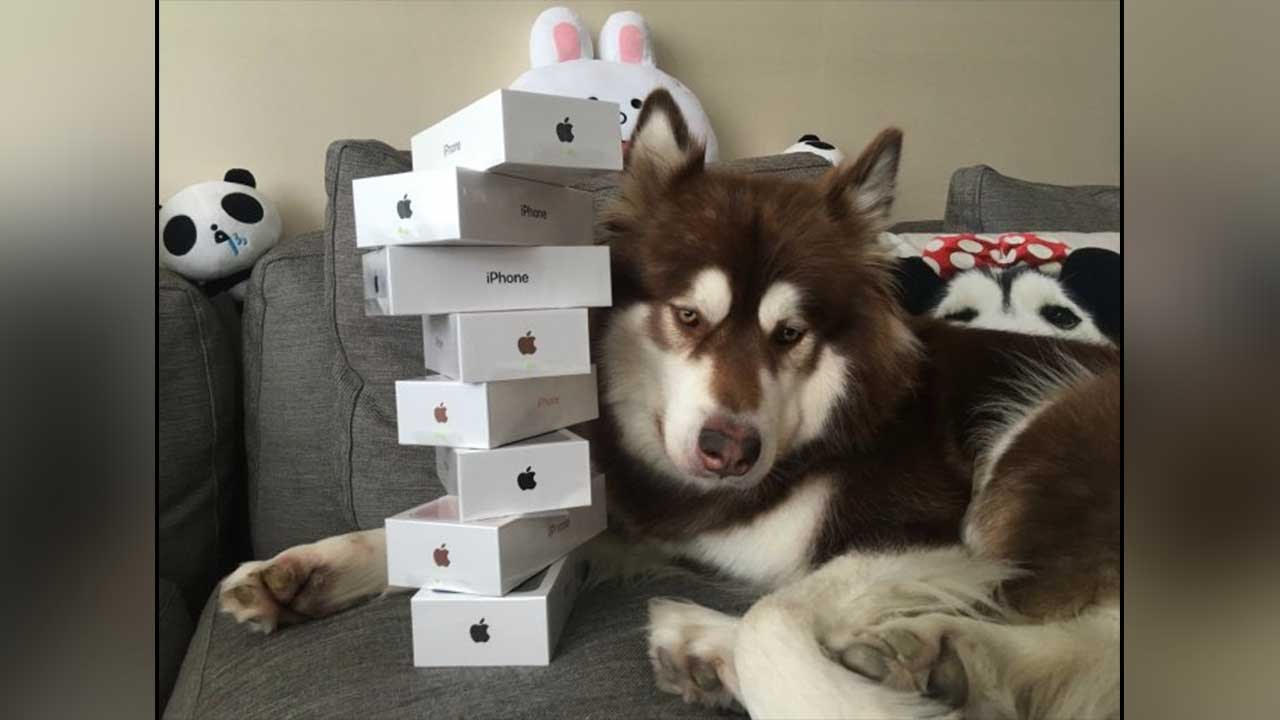Chinese Billionaire's son gifts his dog 8 Apple iPhone 7s| Oneindia News
