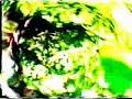 Orlando contreras de Amigo de que