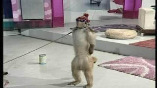 Street Entertainer - Monkey / Goat   Life Skills TV