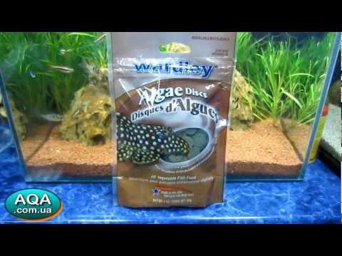 сухой аквариумный корм для рыбалки