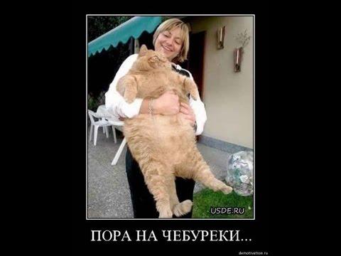 Котята Милые котики Смешное видео с кошками Приколы Котята Милые котики