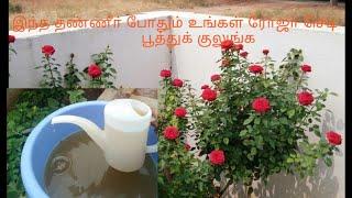 Home made organic fertilizer for roseplant/organic water fertilizer for flowering plants