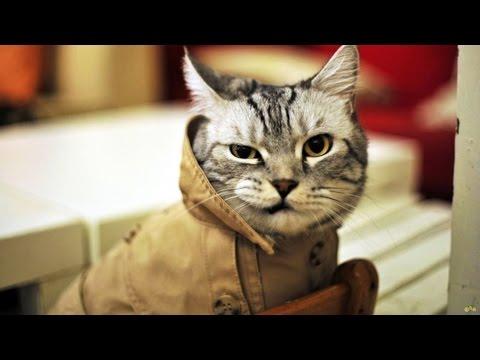 Мой кот - лучший кот, он любит хип-хоп ))