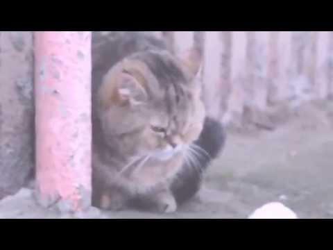 Социальный ролик в защиту бездомных животных