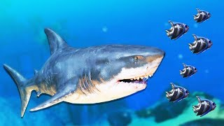 Huge Great White Shark Attack! - Feed and Grow Fish Gameplay