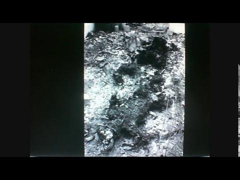 Tragedia de 1984 en san Juanico El Tri