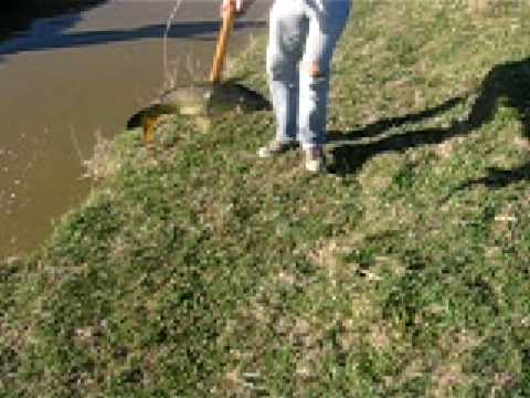 caza de carpas con arpon  parte 1