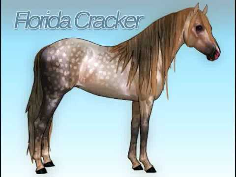 Horse Isle: Florida Cracker Drawing Video