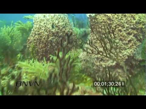 7/31/2010 West Palm Beach, FL scuba diving with fish stock footage
