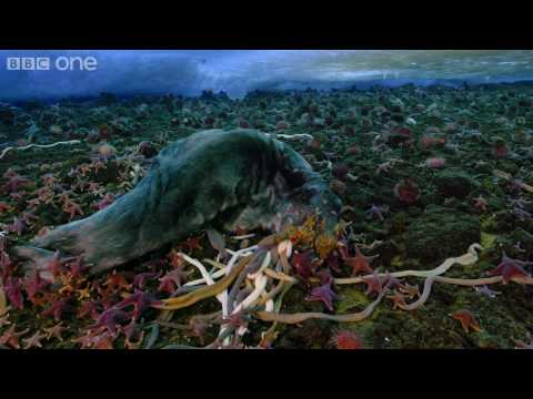 life-timelapse-of-swarming-monster-worms-and-sea-stars-bbc-one.html