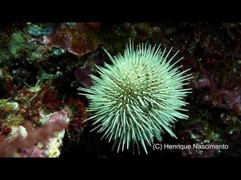 Diving in SESIMBRA