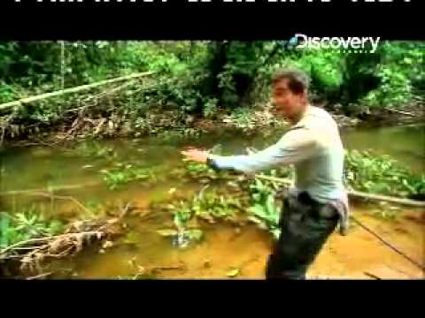 Man vs wild hunting fishing piranha youtube for Fishing license for disabled person