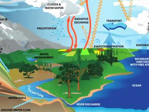 Water Evaporated from Trees Cools Global Climate