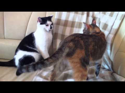 Kocie Zabawy