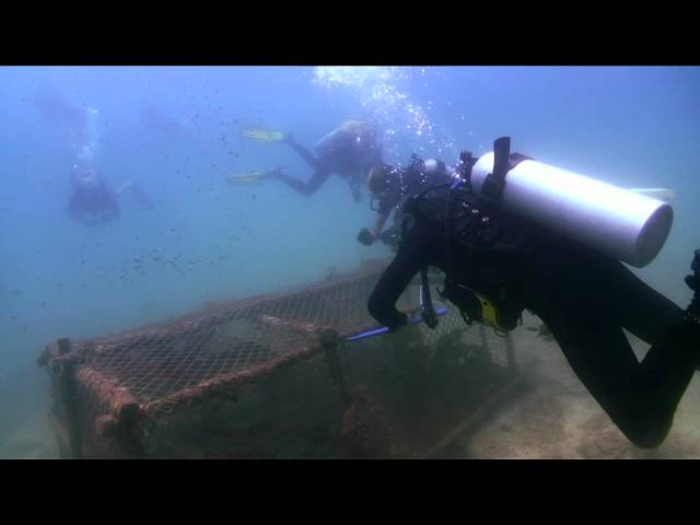 Hunting For Cages: www.filmedkohtao.com