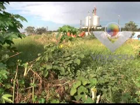 Administração pública de Araguari coloca a população em situação de risco