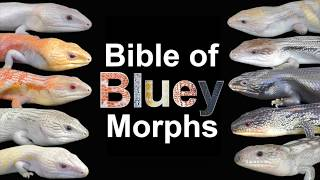 Bible of Bluey Morphs