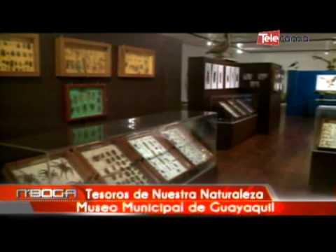 Tesoros de nuestra naturaleza Museo Municipal de Guayaquil