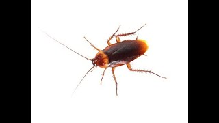 China woman immobilizes cockroach eating her eardrum; doctor exterminates it 2 days later