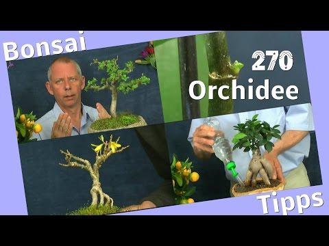 Bonsai und was geht sonst mit Pflanzen