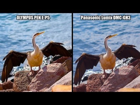 GH3 vs E-P5 - SHOOTOUT - PEN EP5 or Lumix DMC-GH3? You decide...