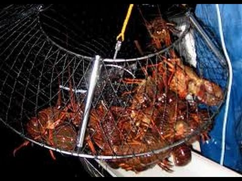 how to make stone crab traps