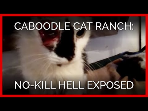 Caboodle Cat Ranch Exposé: No-Kill Hell