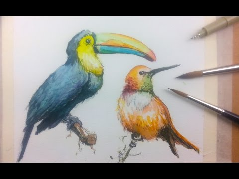 Draw & Paint Birds with Ink and Watercolor Part 1