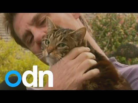 Hero cat saves man from burning home