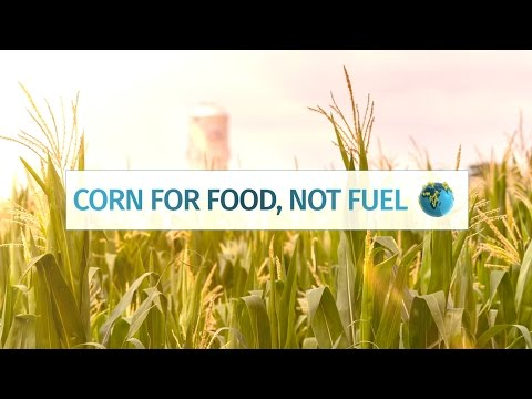 Corn for Food, Not Fuel