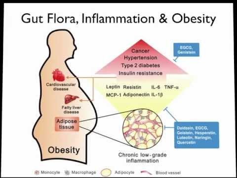 obesity alters gut microbial ecology essay It is sensitive to dietary changes and able to alter composition within gut microbiota and obesity gordon j microbial ecology: human gut microbes.
