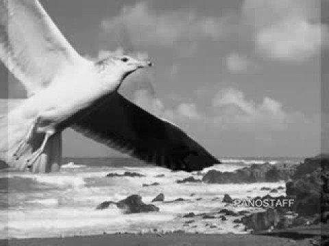 ΓΛΑΡΟΣ - ΜΑΝΩΛΗΣ ΛΙΔΑΚΗΣ Στίχοι & Μουσική Βάσω Αλαγιάννη (Glaros (Gull), Manolis Lidakis)