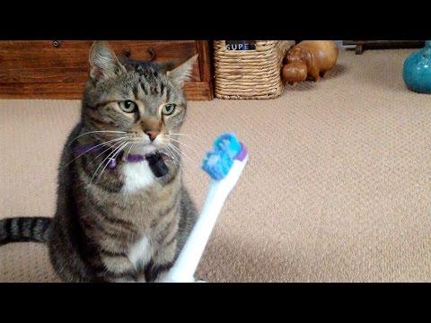 ワガママ猫に電動歯ブラシをそっと向けてみると興味津々の反応を見せる!?