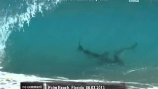 SHARKS IN FLORIDA. АКУЛЫ ВО ФЛОРИДЕ.