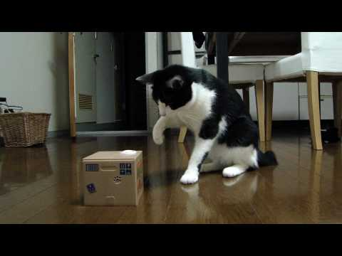 雄山(猫)vs猫貯金箱 Yuzan-cat vs Cat Bank