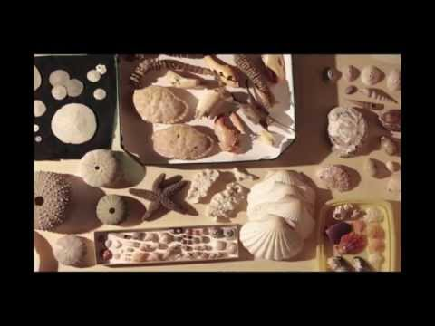 (NEW HD) Ocean Acidification: Where will all the seashells go?